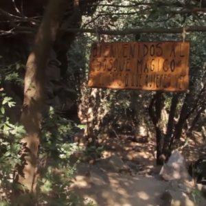 bienvenidos al bosque magico
